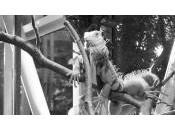 Mulhouse: iguane milieu l'avenue