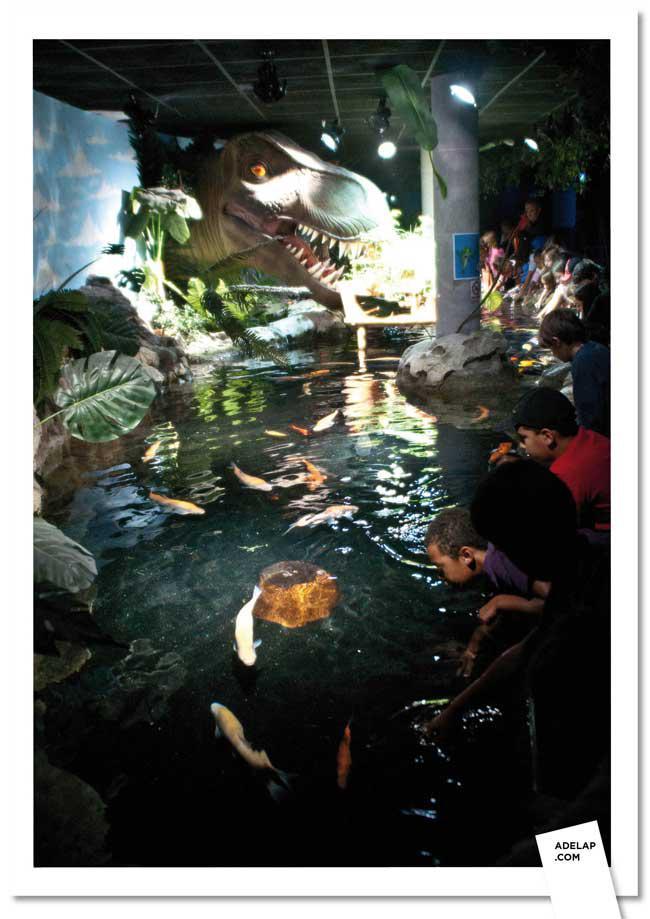 D couverte aquarium de paris paperblog for Aquarium de paris jardin du trocadero