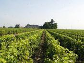 polar l'honneur vins français