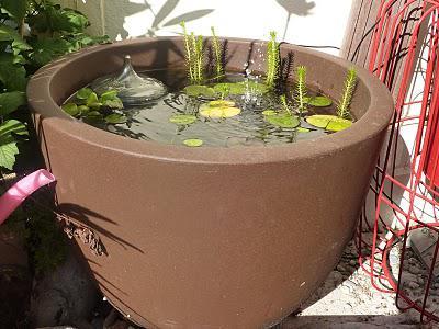 Alors, que pensez vous de ce petit bassin ? Nhésitez pas si vous ...