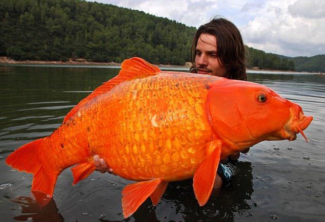 peche-poisson-rouge-14-kg-L-1