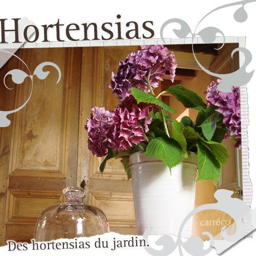 s cher des hortensias voir. Black Bedroom Furniture Sets. Home Design Ideas