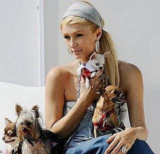 Paris Hilton Villa Pour Son Chien
