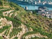 Grands Vins Rhône Nord Montez, Pichat Vernay.