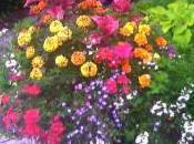 soit fleur annuelle vivace traiter avec meilleur engrais soit.