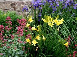 Que ce soit une fleur annuelle ou vivace traiter la avec for Plante exterieur toute saison