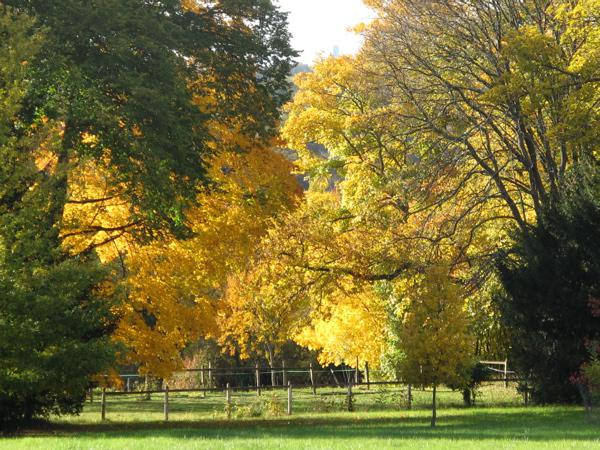 Pourquoi les arbres sont-ils si beaux en automne ?