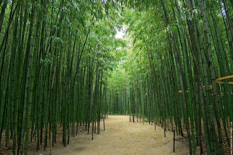 les bambous les arbres les rochers su dongpo paperblog. Black Bedroom Furniture Sets. Home Design Ideas