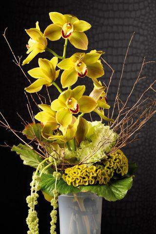 5 conseils pour bien soigner une tige d 39 orchid e cymbidium paperblog. Black Bedroom Furniture Sets. Home Design Ideas