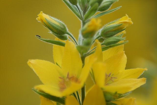 Le langage des fleurs paperblog for Langage des fleurs