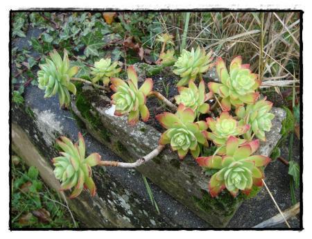 20 novembre 2010 le jardin de roger meschers paperblog - Quand faut il couper les fleurs fanees des hortensias ...