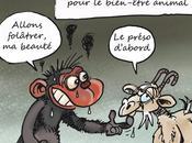 chèvres, love Benoît