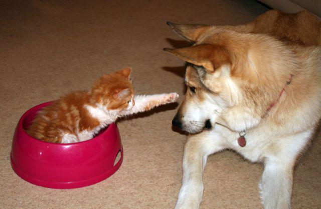 Animaux droles du jour 37 photos lire - Videos droles d animaux ...