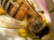 Ecologie intelligence collective abeilles hommes