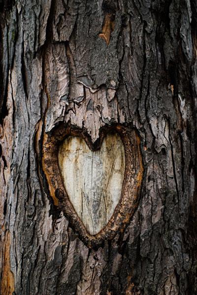 Les arbres aussi versent des larmes (Alain Mabanckou)
