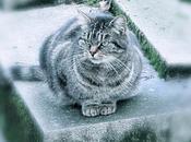 chats cimetière Montmartre