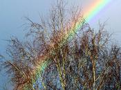 Journal d'une L'arc-en-ciel (12-12-2010)