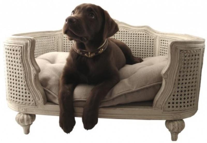 Zoom sur le canap pour chien ou chat arthur paperblog for Canape pour chien