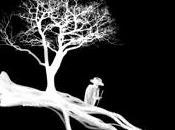 L'homme plantait arbres