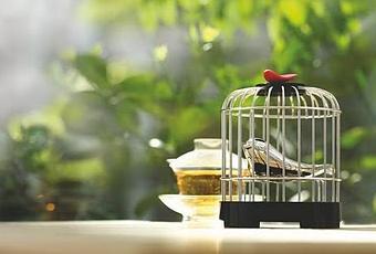 ouvrez la cage aux oiseaux paperblog. Black Bedroom Furniture Sets. Home Design Ideas