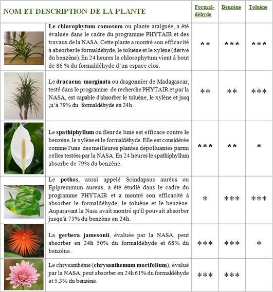 Combattre les pollutions bureautiques avec des plantes - Les plantes depolluantes purifier l air de la maison ...