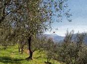 Menton, après-midi sous oliviers