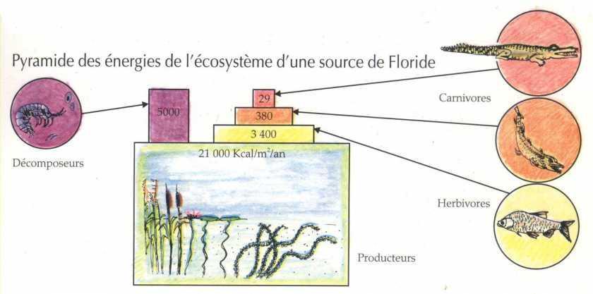 Productivité et énergie dans l'écosystème