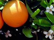 L'ingrédient mois: fleur d'oranger