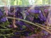 Macérât violette