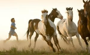 Into_the_Wild_Horse_1236gg