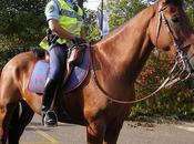 Gendarme cheval
