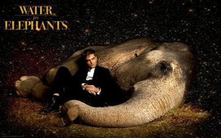 Water for elephants essay