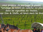 attelage dans vignes Lucey