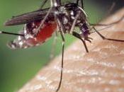 Vaincre paludisme avec