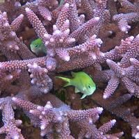 corail2