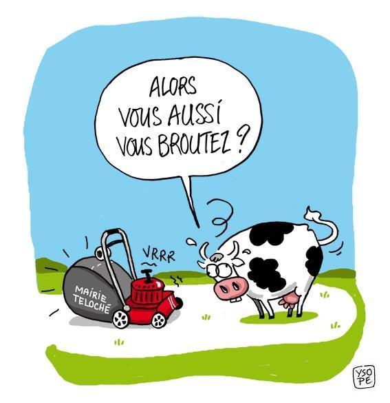 Vache et tondeuse paperblog - Vache dessin humour ...