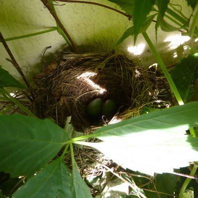 La saison est tellement belle que la vie se passe au jard - Tomber enceinte en allaitant et sans retour de couche ...