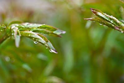 Matin de pluie