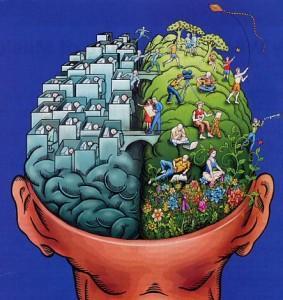 Cerveau gauche, cerveau droit… A quoi servent-ils ?