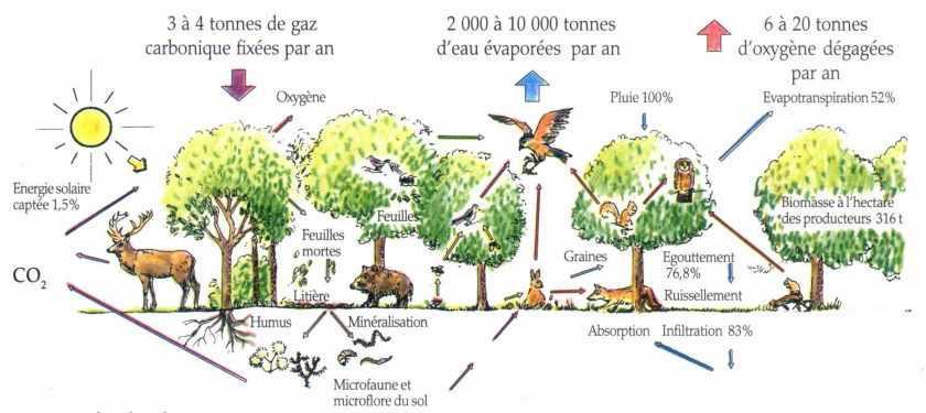 Exemples d'écosystèmes | À Découvrir