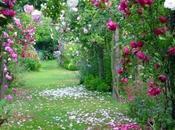 roses Samode Serge Airoldi