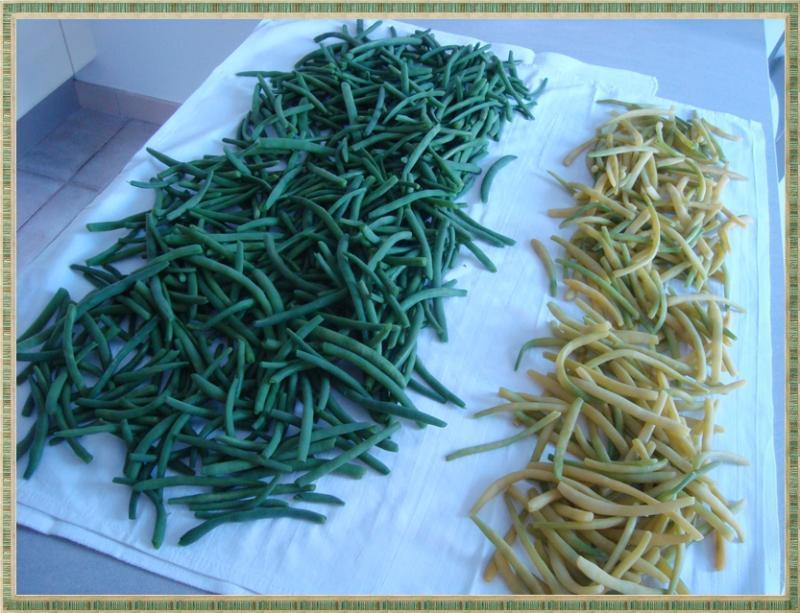 Congeler les haricots verts frais lire - Comment congeler des haricots verts frais du jardin ...
