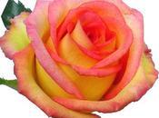 Saint Valentin, février, pensez fleurs