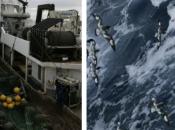 L'importance pêches profondes anticipée