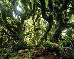 L'exposition de Yann Artus Bertrand «Des forêts et des Hommes» a lieu à Decize !