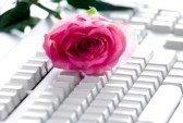 4530454-photo-de-rose-rose-bouton-blanc-couch-sur-ordinateu.jpg