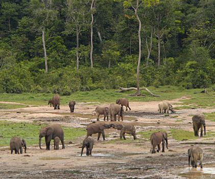 9000 milliards de F pour la gestion intégrée des forêts du bassin du Congo