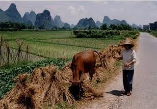 microfinance chine