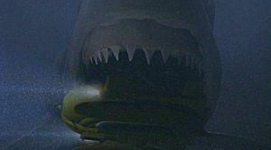 sharkattack304
