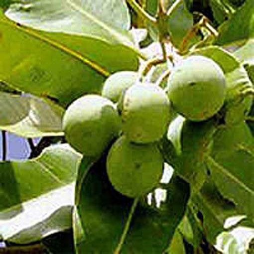 Se soigner par les plantes polynésiennes